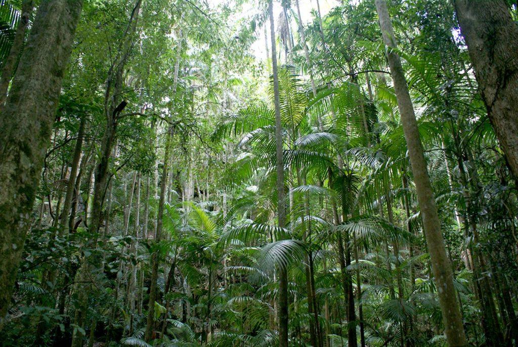 タンボリンマウンテンの熱帯雨林