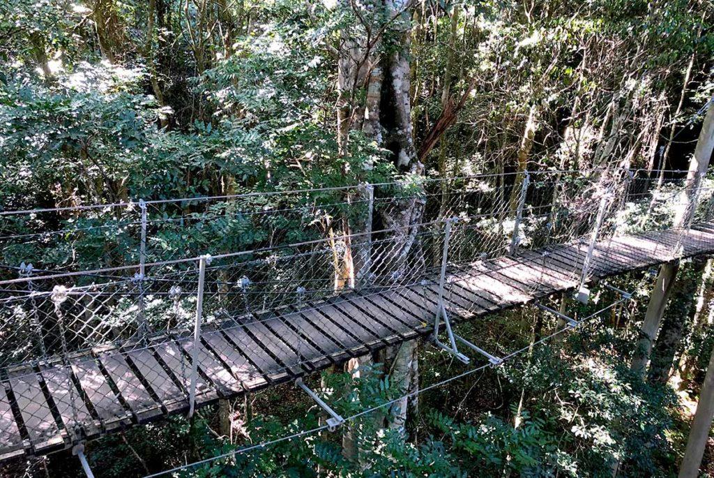 ラミントン国立公園のオライリーズ