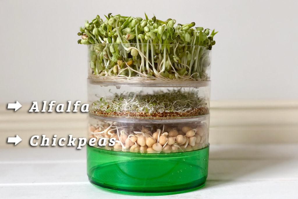 発芽豆とアルファルファの育て方